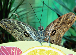 The Museum of Tropical Butterflies